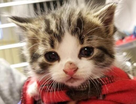 英国将立法禁止宠物店贩售幼猫幼犬 落实以领养替代购买