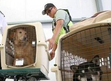 好消息:宠物通关有新政,猫狗入境更便利