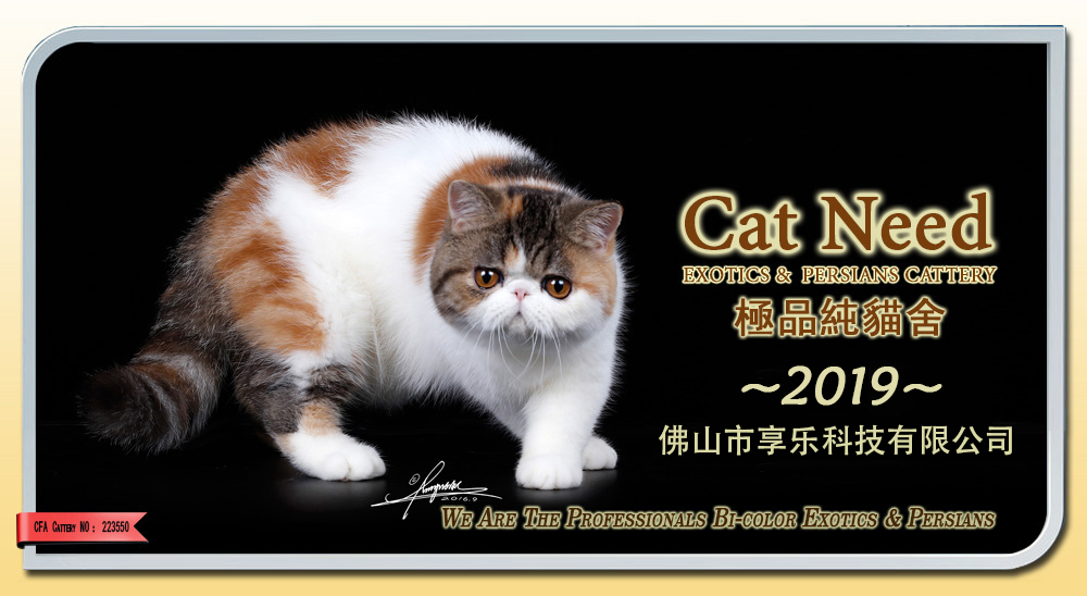 CATNEED极品纯猫舍