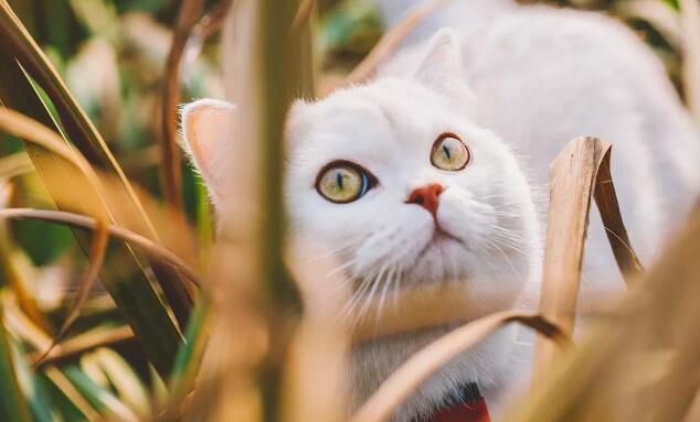 2021年美国宠物市场将突破千亿美元,电商和宠物智能成趋势